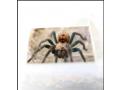 invertebrates-and-reptiles-for-sale-small-2