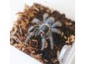 invertebrates-and-reptiles-for-sale-small-0