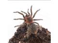 invertebrates-and-reptiles-for-sale-small-1