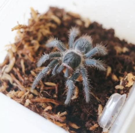 invertebrates-and-reptiles-for-sale-big-0