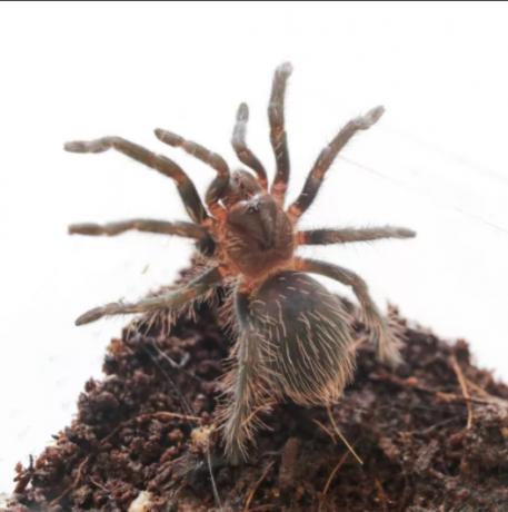 invertebrates-and-reptiles-for-sale-big-1