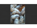 isopods-and-springtails-small-1
