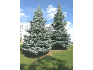 COMPLETE TREE SERVICES ..SUPPLIED..INSTALLED RIGHT FROM ONTARIO