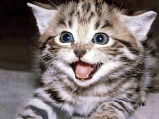 Kittens 8 weeks