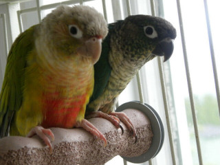 Wanted: SEARCH BIRDS TO GIVE