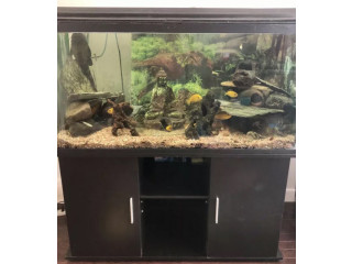 90 Gallon tank with everything! Fish included